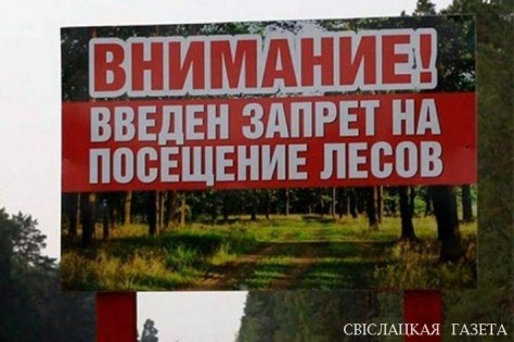 There is a ban on forest visits in Svisloch region